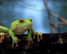 Frog Waterfall